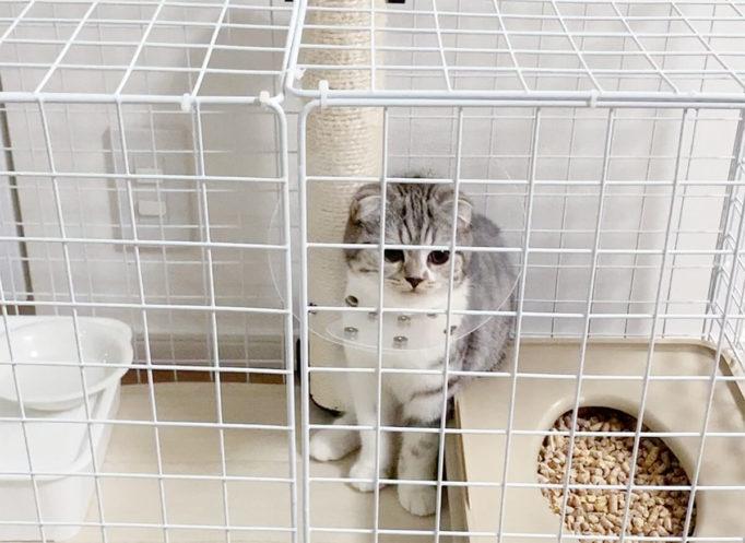 エリザベスカラーをつけて固まる猫