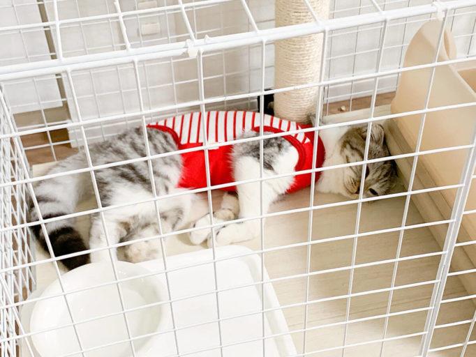 術後服を着てケージで眠る猫