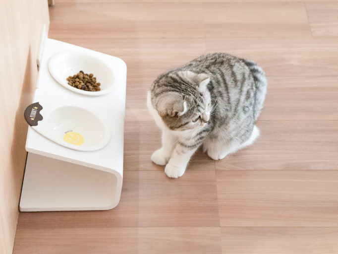 シンプルでおしゃれな猫の食器台と猫