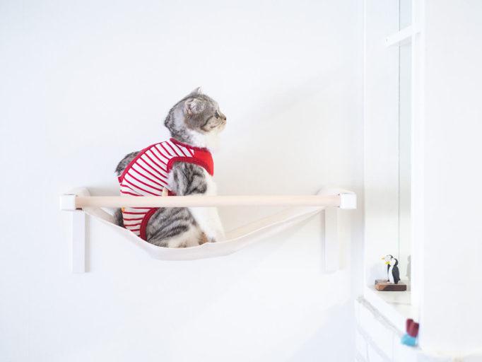 キャットハンモックに乗った猫