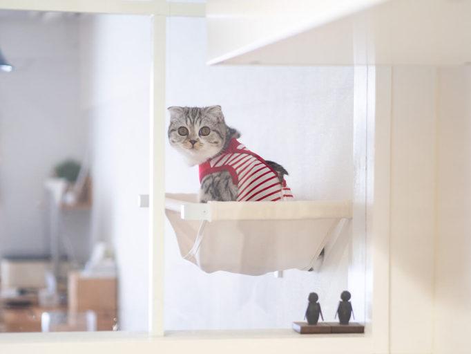 キッチンから見たキャットハンモックに乗った猫