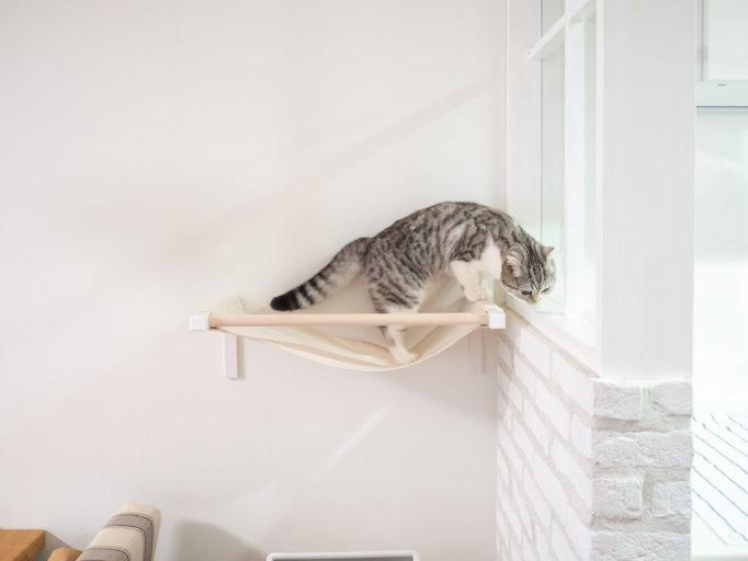 ハンモックに乗ってる猫