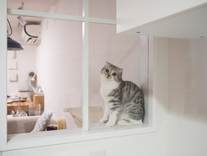 キッチンの窓を覗く猫