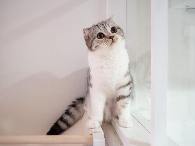 ハンモックに立つ猫