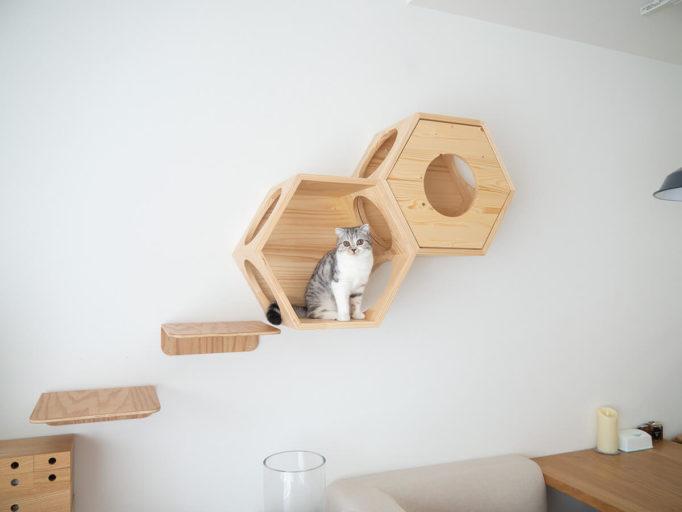 myzooの六角ハウスとキャットウォークステップと猫
