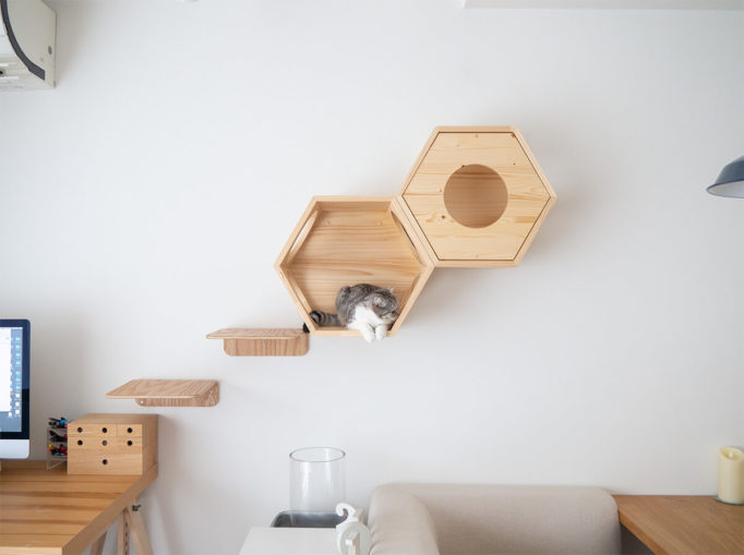 myzooの六角ハウスと猫
