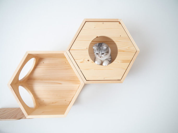 myzooの六角ハウスの穴から下を覗く猫