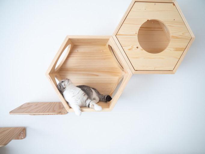 myzooの六角ハウスに寝そべる猫