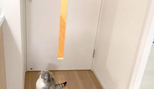 猫がドアを開けるのを簡単に防止できる♪ドアノブの向きを変える方法。