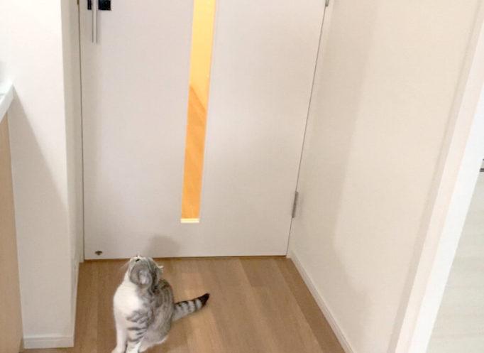 ドアノブを見つめる猫