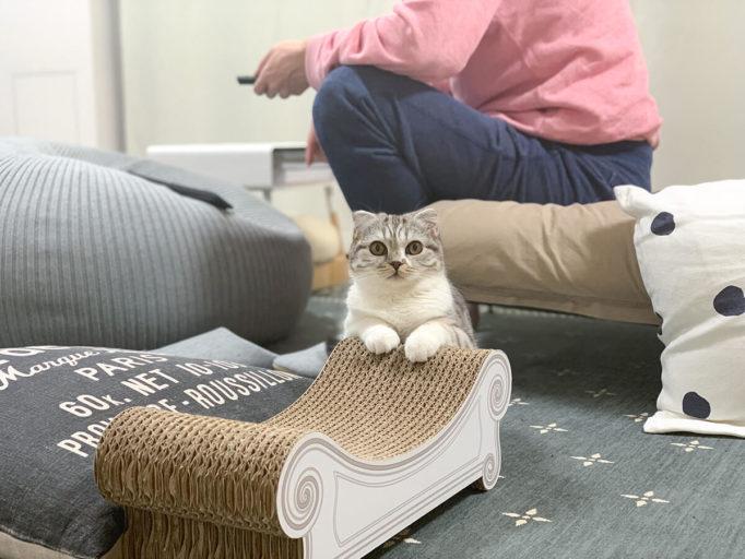 こちらを見てる猫