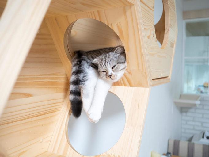 キャットハウスで熟睡する猫