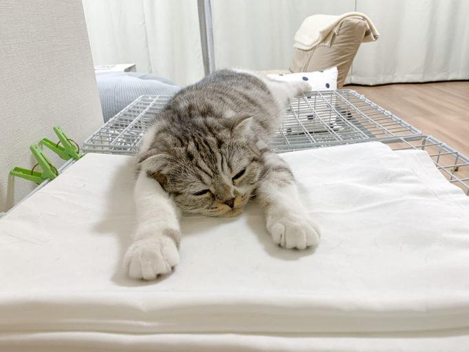 伸びてくつろぐ猫