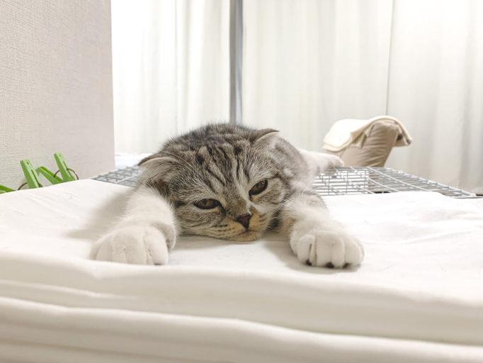 伸びてくつろいでいる猫