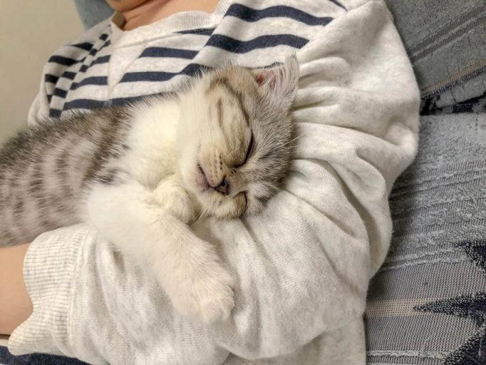 子猫を抱っこしてるところ