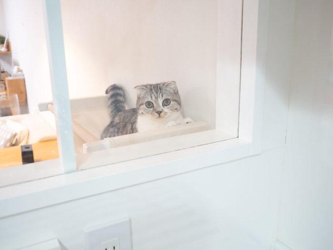ニャンモックからキッチンを眺める猫