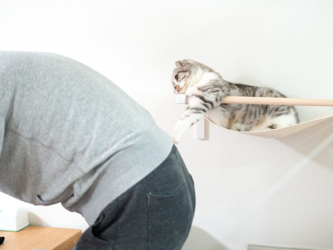 人間を観察する猫