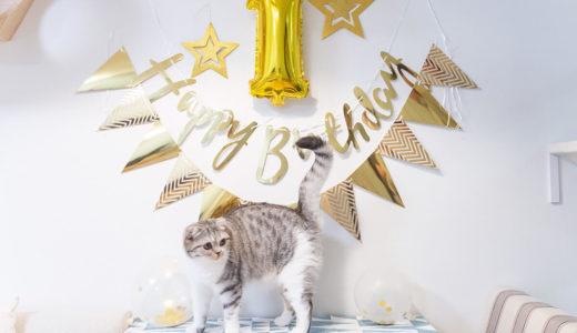 子猫が1歳に成長して変わったこと5つ。