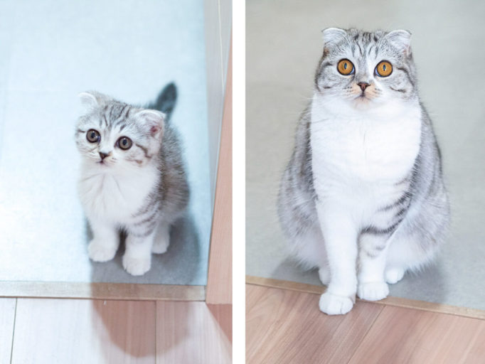 子猫と成猫の比較