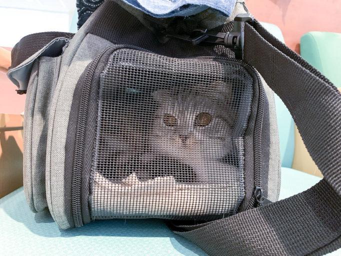 キャリーバッグの中の猫