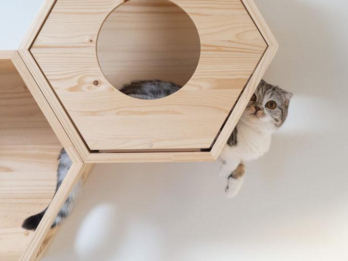 キャットハウルの中の猫