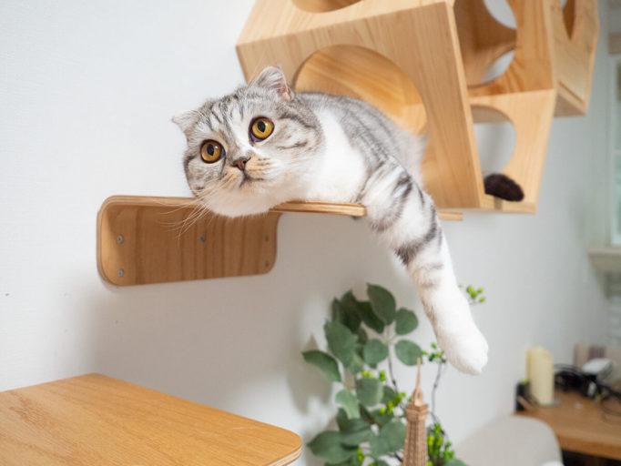 myzooキャットハウスに寝そべる猫