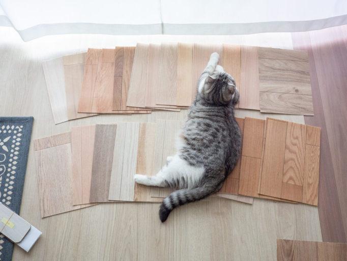 クッションフロア のサンプルと猫