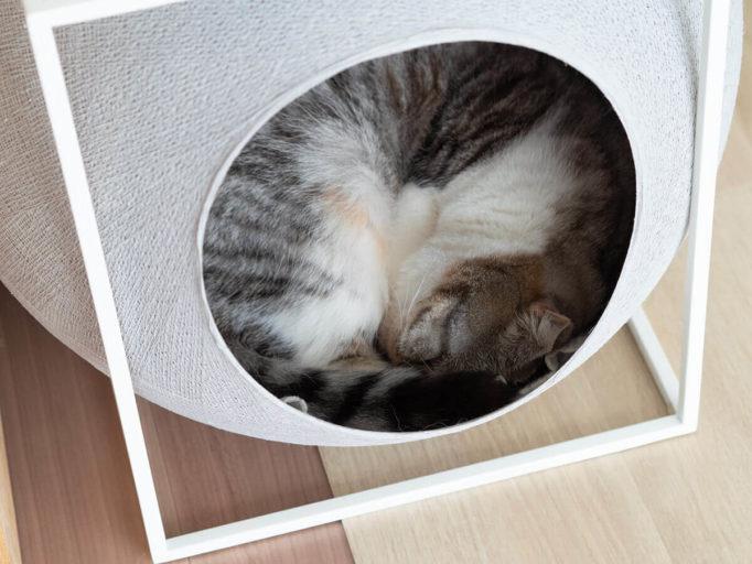 meyou猫ハウスの中でくつろぐ猫