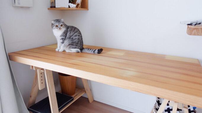 IKEAのデスクと猫