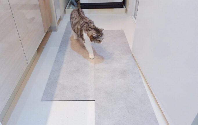 フロアタイルの上を歩く猫